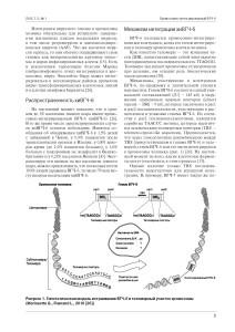 хиВГЧ-6 инфекция и иммунитет_Страница_3