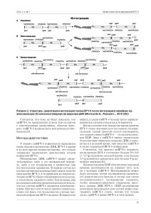 хиВГЧ-6 инфекция и иммунитет_Страница_5