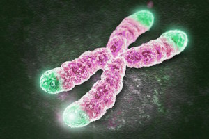 telomers
